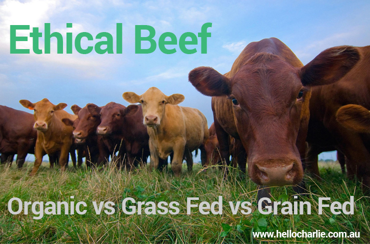 ethical beef organic grass grain fed