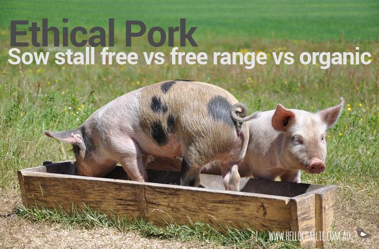Ethical Pork: Sow Stall Free vs Free Range vs Organic